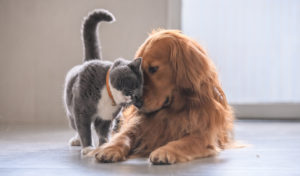 cat and dog - CBD for dogs and cats