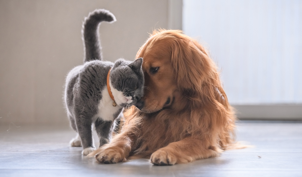 CBD for Dogs and Cats? Here's What You Need to Know